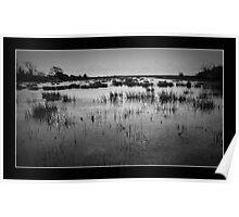 Newport Wetlands Poster
