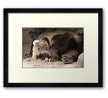 Kodiak Bear Framed Print