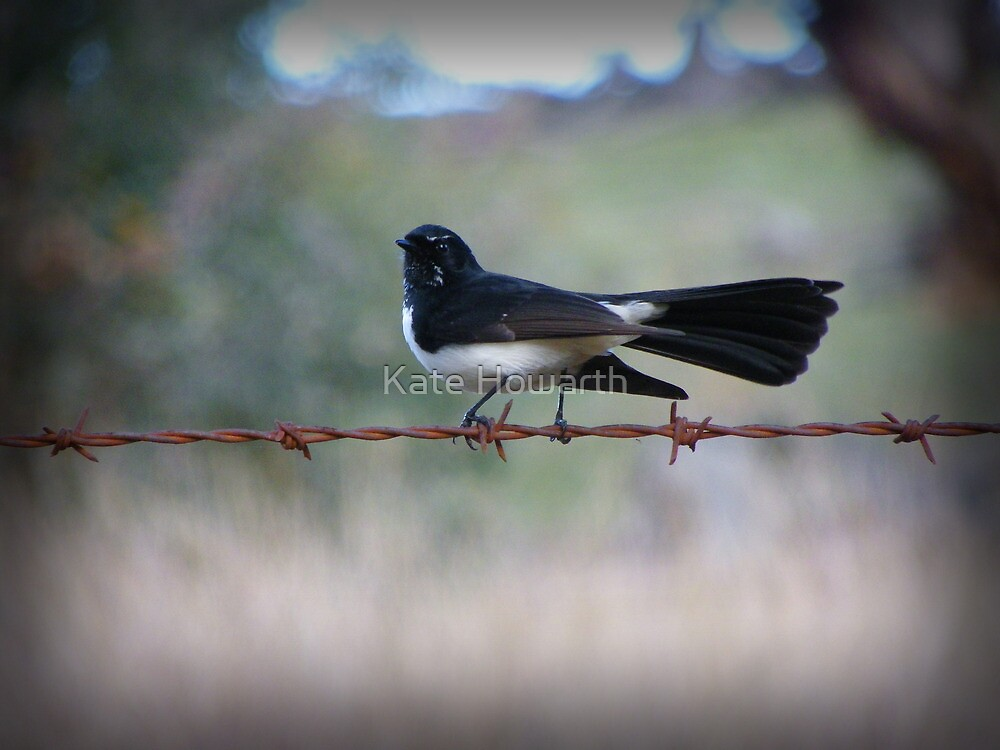 Willy Wagtail on a Wire, Wee Jasper by Catherine Howarth