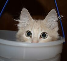 MoMo in the Bucket by Angeleyes117