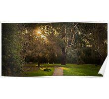 Sunlight through trees Poster