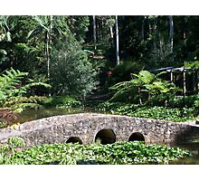 Bridge in the Botanical Gardens Photographic Print