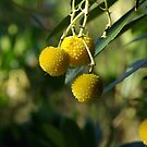 Native Fruit by tarynb