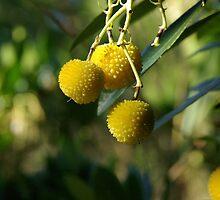 Native Fruit by tarynb