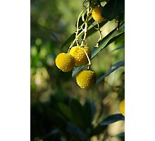 Native Fruit Photographic Print