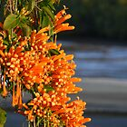 Colour at the bay by PhotosByG