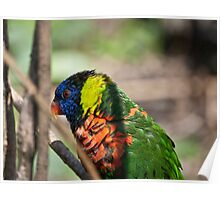 THE COLORFUL BIRD Poster