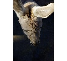 Kangaroo's Lashes Photographic Print