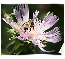 Bee in the Spot Light Poster