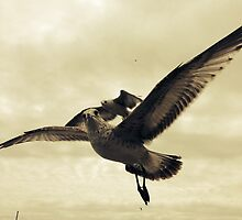 Seagulls At The Beach 2 by Johnnyagogo