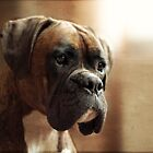 The Boxer by boxerportraits