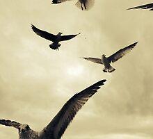 Seagulls At The Beach 3 by Johnnyagogo