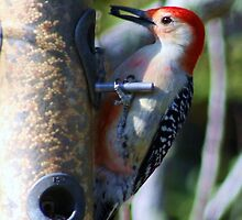 Woody Wood Pecker by Paulette1021