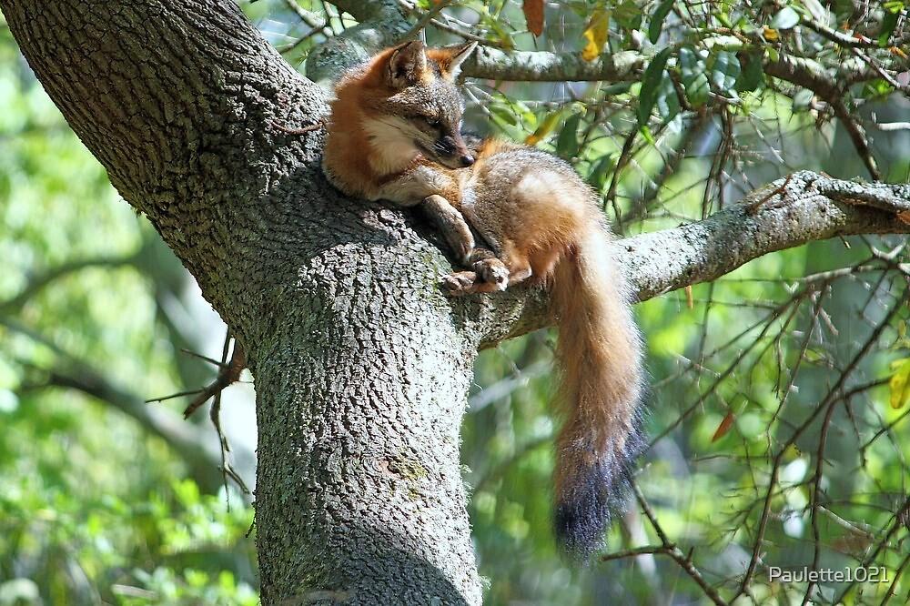 Fox lying in a Tree by Paulette1021