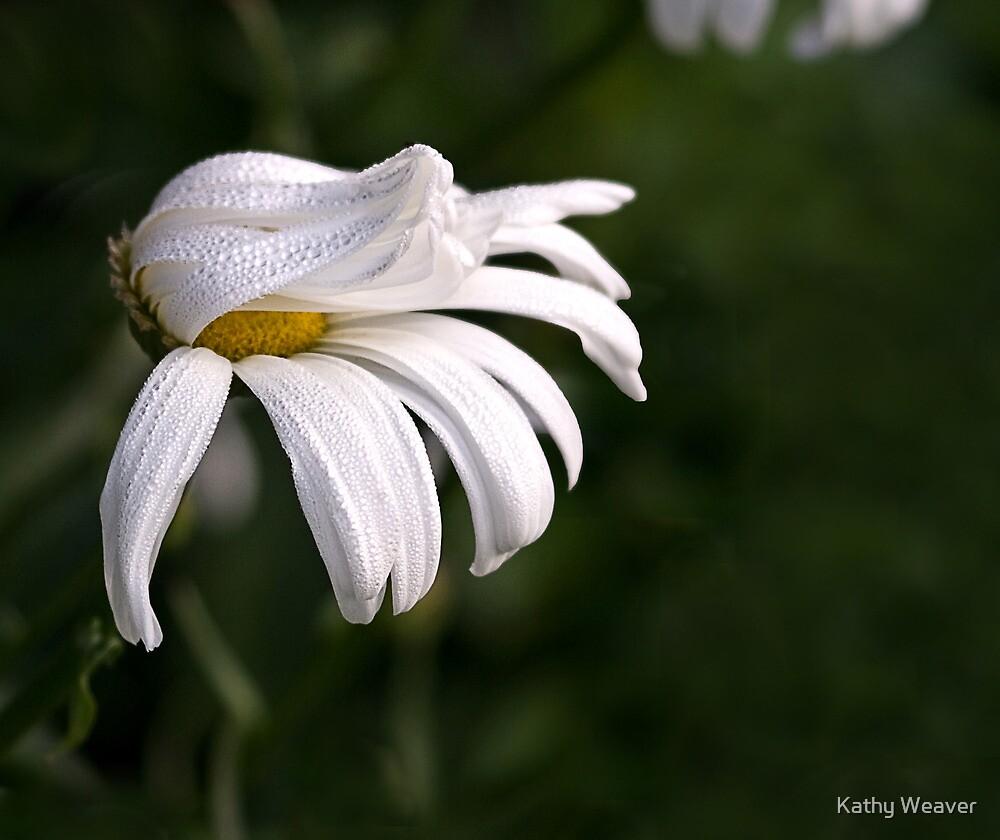 Rain On the Daisy by Kathy Weaver