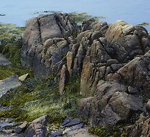 Large Rocks and Seaweed by MaryinMaine
