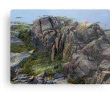 Large Rocks and Seaweed Metal Print