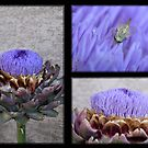 Artichoke Plant by Kimberly Palmer