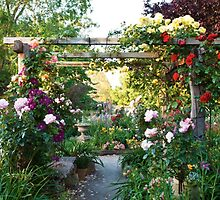 The Rose Trellis  by sandysartstudio