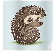 Hedgehog which looks at back Poster