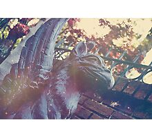 Haunted Griffin Photographic Print
