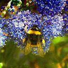 Summer bee by GraceEloise