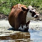 The Udder Cool Down by Barb Miller