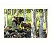 Bull Moose & Baby Moose Art Print