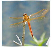 Orange Dragon Fly Poster