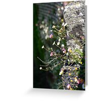 Wall Daisies  Greeting Card