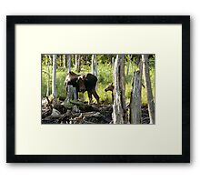 Bull Moose & Little Buddy Framed Print