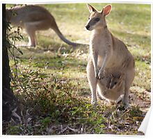Wallaby with her Joey Poster