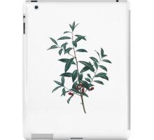Ilex cassine iPad Case/Skin