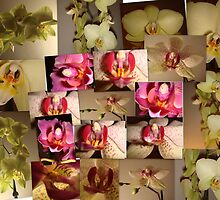 Orchid Collage by Sandra Cockayne