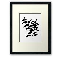 andromeda acuminata Brush Framed Print