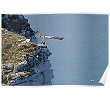 Bempton Cliffs 6 Poster