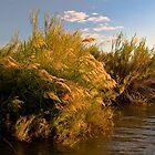 Sunset Reeds by Neil Messenger