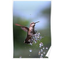 Bathing Kolibri Poster