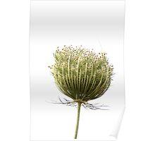 Wild flora XI 5459 Poster