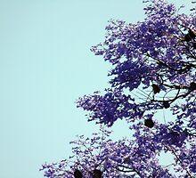 Jacaranda in bloom by JoAnnFineArt