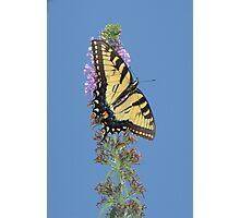 Summer Flutter 5 Photographic Print