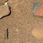 Ants Call Sofala Home by sofalansw