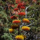 Colorful Yucca Flowers by Stormygirl