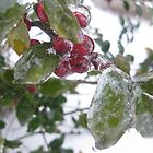 Winter Berries by mnwagner