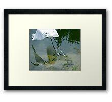 Reflection of an Egret in Flight Framed Print