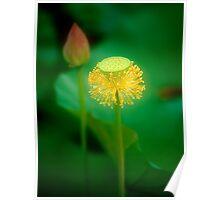 Lotus #70 Poster