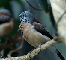Pretty Bird ... by Kirstyshots