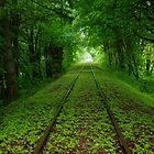 The Green Tunnel by DavesPhoto