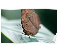 Leaf Butterfly  Poster