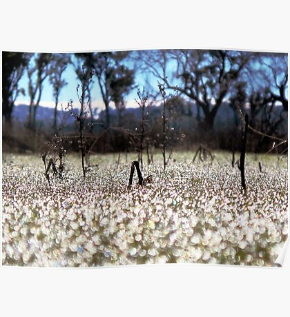 Frost - Dangars Lagoon, Northern Tablelands, NSW, Australia Poster